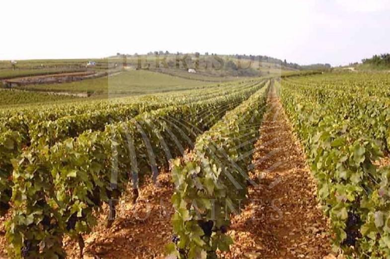Prestigious wine estate in Burgundy : Ref 1916/012