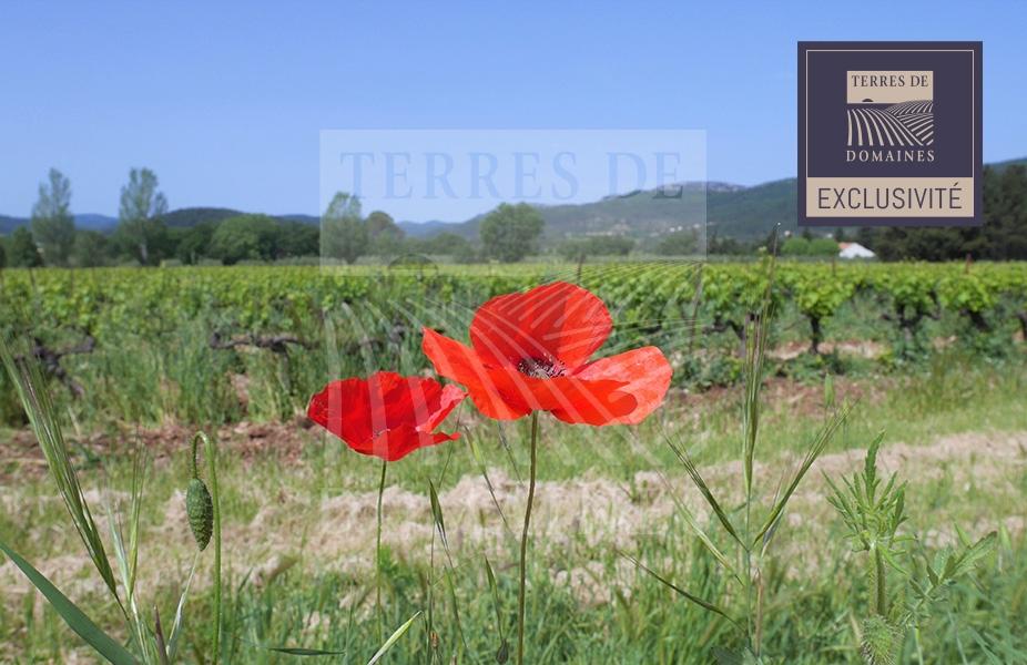 Exclusivité – Var Sud – Très Bel ensemble viticole d'un seul tenant – Ref: 1917/025