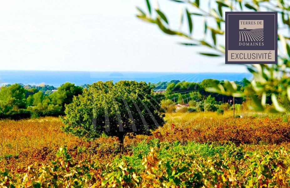 Exclusivité – Terres à planter dans l'aire d'appellation Bandol – Ref: 1917/031