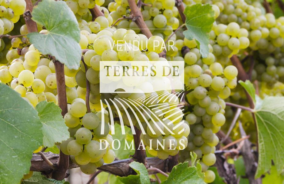 Diverses parcelles de vignes en AOP Villages côte de Beaune et 1er cru Cote Chalonnaise