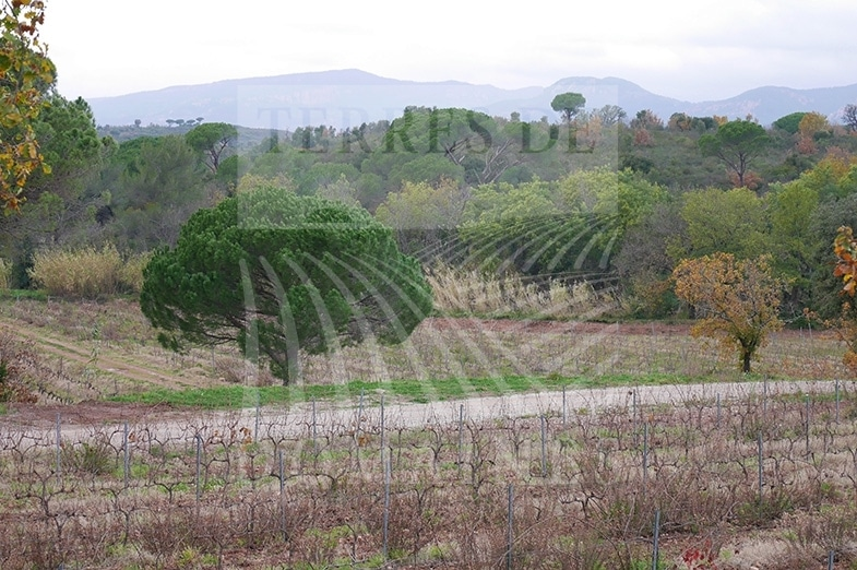 Un Domaine bucolique en Provence – Ref : P0086