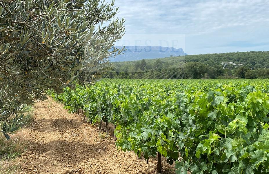 Un domaine d'un seul tenant en Provence – Ref : P0098