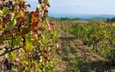 Un réel outil de production de vins de Provence – Ref 1917/032
