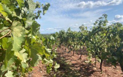 Historic Estate in Côtes de Provence – Ref: P104