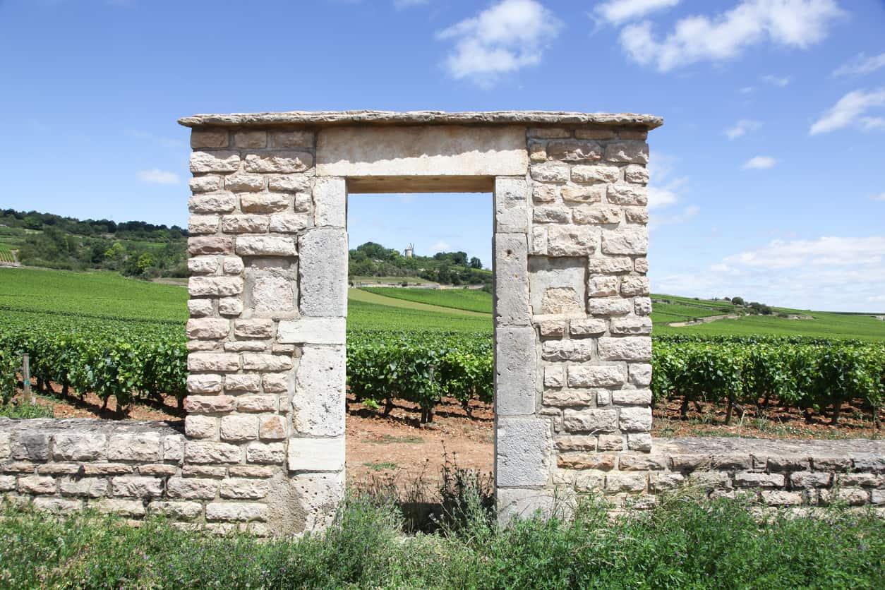 domaine viticole bourgogne opportunités