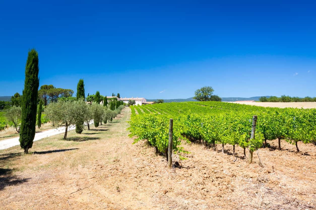 domaine viticole provence de rêve