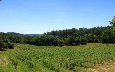 Domaine viticole de 36 hectares d'un seul tenant – Ref: 1917/021