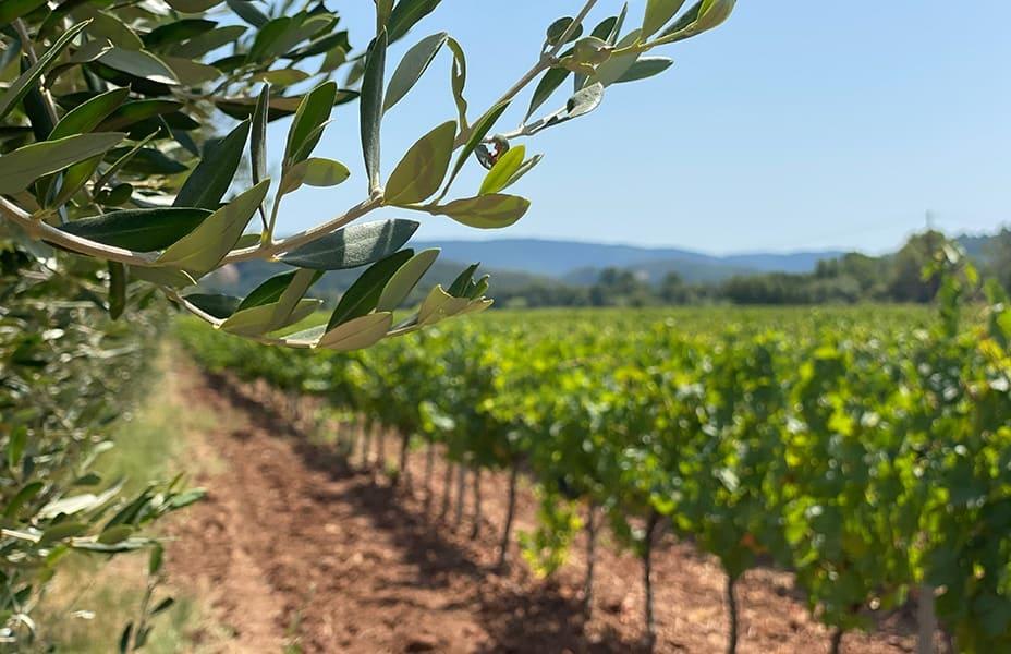 domaine viticole provence cadre de rêve