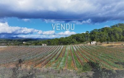 Wine estate of 23 hectares of a single tenant – Ref : 1917/023