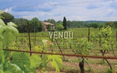 A bucolic field of Provence – Ref: 1917/026